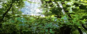 Altijdbekijkbaar, Desiree Ubink, fotografie. lente, groen, bewerkt, afdruk op dibond,