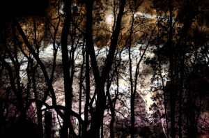 Fotografie, nieuw werk 2021,Kunst, Digitale Collage, Alphen aan den Rijn, Desiree Ubink, Bewerkte foto's. Schilderen met foto's, Digitale Kunst, Te Koop, Te Huur, Foto's, Fotocollages, Analoge collages, Natuurfotografie, Abstracte fotografie, Mysterieuze foto's, kunstacademie Breda
