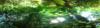 13-05-16  HET BLADERT IN HET BOS Panorama 3